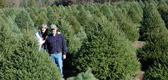 Welcome - Wolgast Tree Farm €� Christmas Trees, Bluebird Boxes & Local Honey